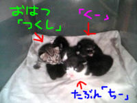 Blog200701211_1