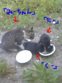 Blog200701213_1